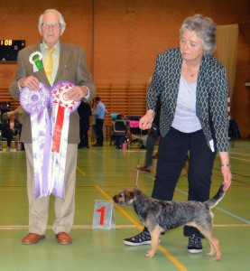 Kennel Hjelme Border Terrier Hjelme Lagavulin DTK Vinder 2015
