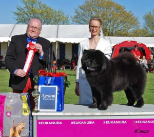 Chow Chow Kennel Hjelme Piuk Chow Possesses Black Passion og Stine Hjelme og Arne Foss