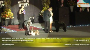 Chow Chow Kennel Hjelme Piuk Chow Possesses Black Passion og Stine Hjelme